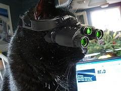 Kitty Night Vision