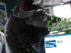 Kitty Night Vision